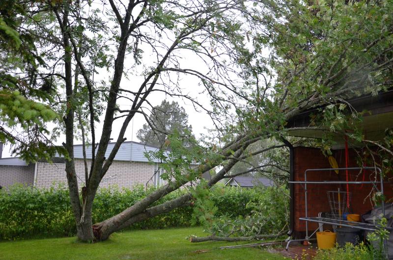 Kannuksen keskustassa tuuli kaatoi pihan puun.
