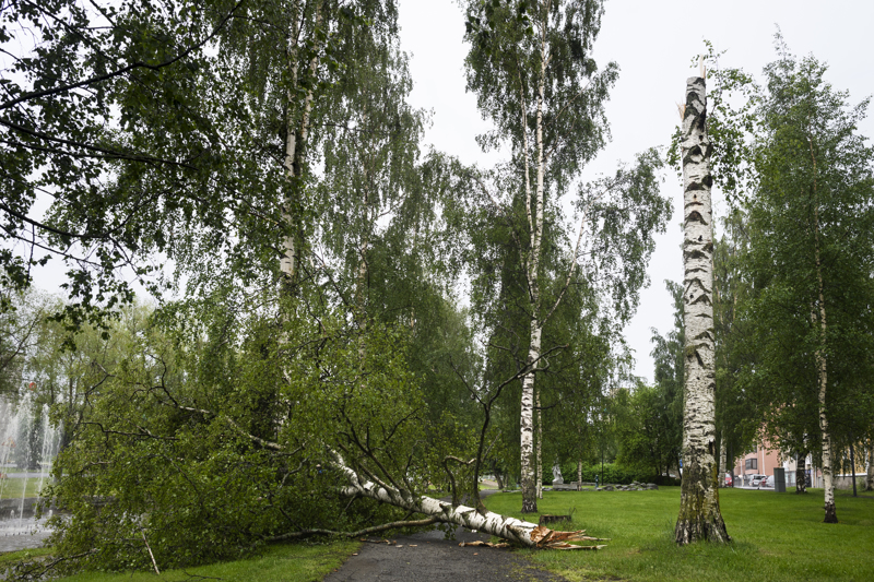 Puuskainen tuuli on kaatanut puita.