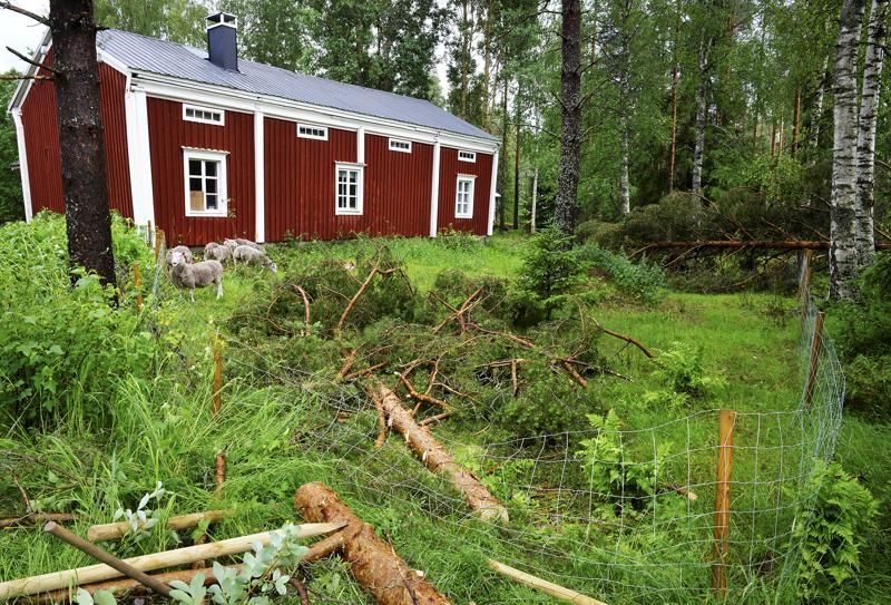 Myrskyn kaatamat puut aiheuttivat vahinkoa Taide Vionojan pihapiirissä Ullavan Haapalassa.