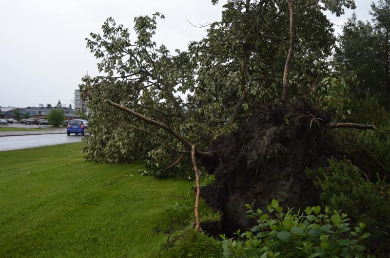 Myrsky kaatoi tiistaina puita Kalajokilaaksossa ja katkaisi myös iltarasteille menevän tien. Tämä kuva on Ylivieskan keskustasta.