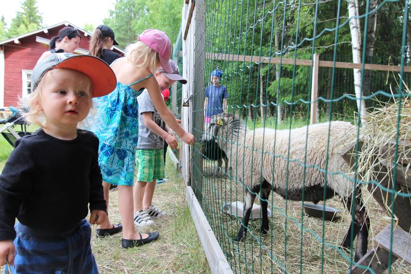 Turo Haapala vieraili Katvalan kotiseutumuseossa ja kotieläinpihassa kesällä 2017.