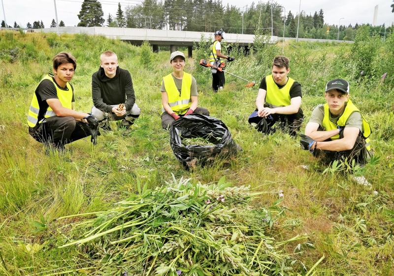Timi Svart, Joonas Kujala, projektityöntekijä Jessica Sjöblom, Valtteri Seppälä sekä Victor Bjolin osittain raivatulla lupiininiityllä. Trimmeröimässä Dominic Theuri.