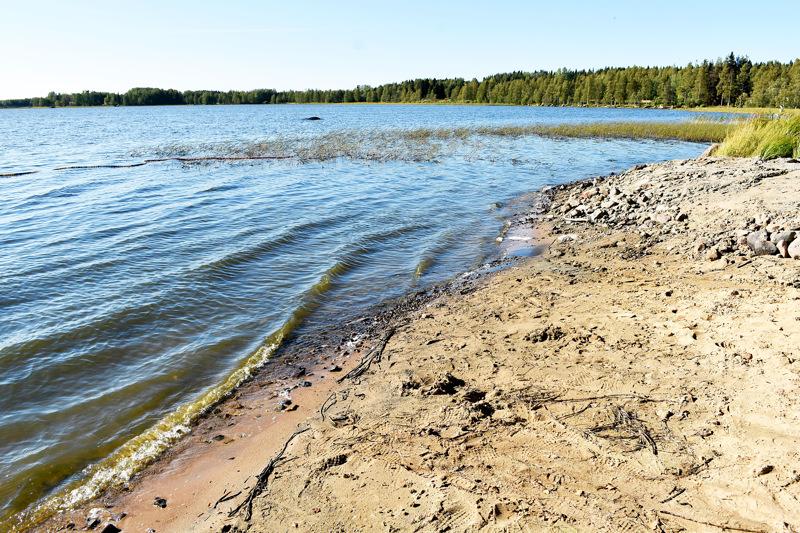Hammasniemen ranta kuuluu valtakunnalliseen sinileväseurantaan. Arkistokuva.