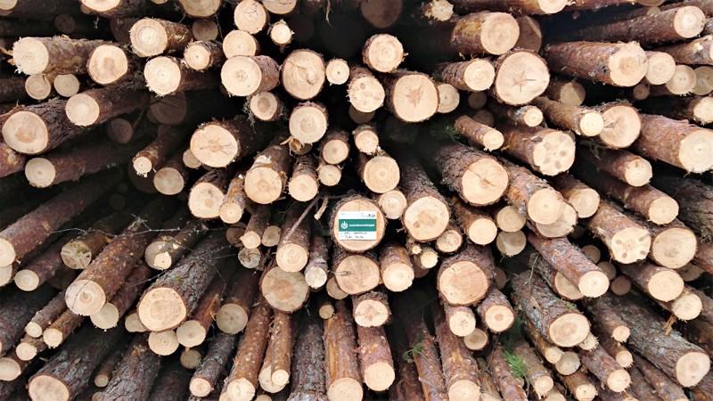 - Suomi tuntee metsänsä parhaiten ja on metsien hoidon osaamisessaan maailman huippua, Esa Pellikainen muistuttaa.