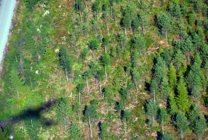 - Uusiutuva perusvoima tulee edelleen kasvuisista metsistämme. Vahvinta kotimaista, biovoimaa ei ole syytä unohtaa, Veli Pohjonen kirjoittaa.