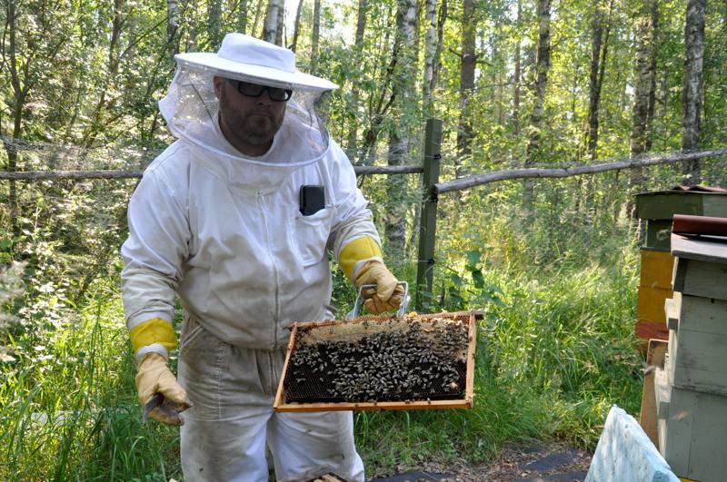 Levyä, johon mehiläiset rakentavat kennonsa, kutsutaan kakuiksi. Kakun yläreunassa näkyy umpeen muurattuja kennoja, joihin on varastoitu hunajaa.