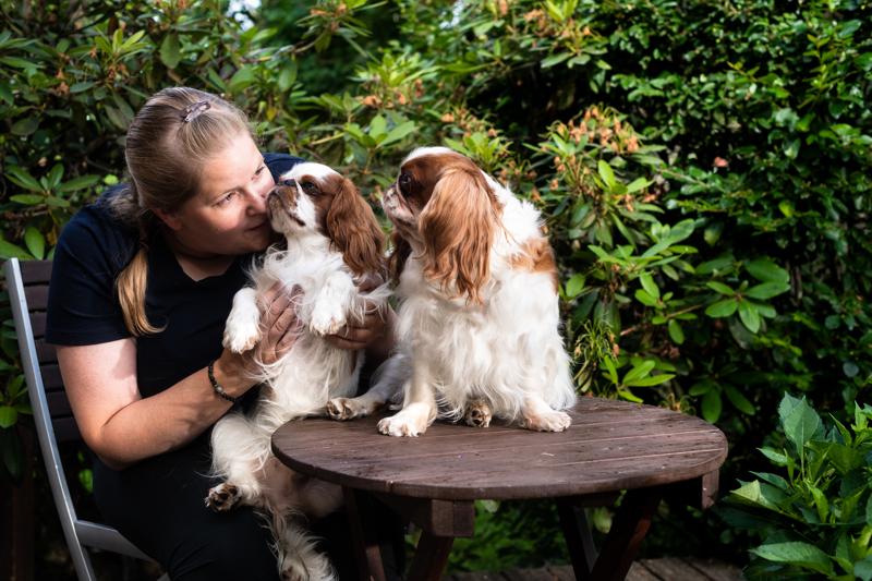 Ilona Vallilan kingcharlesinspanielit Ella ja Tim osallistuvat Kalajoen kansainväliseen koiranäyttelyyn perjantaina ja lauantaina.