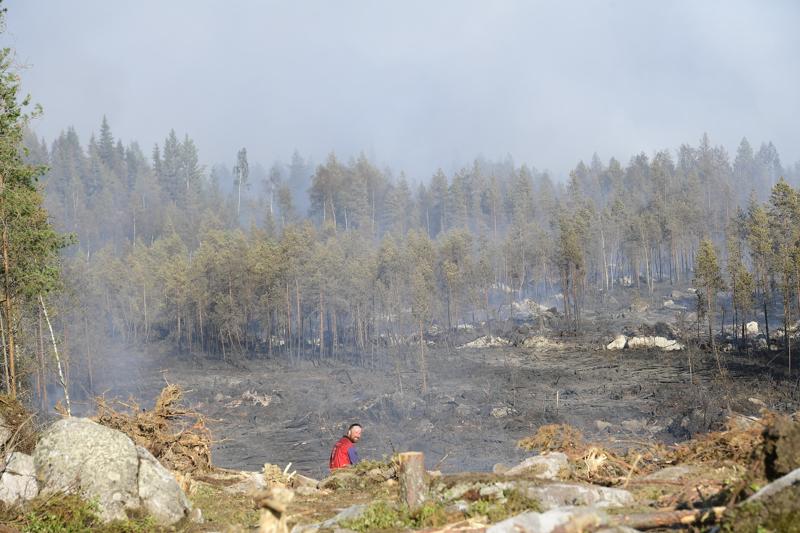 Nopeasti edennyt tuli on polttanut paljon maastoa.