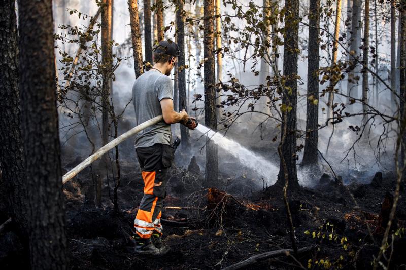 Himankalainen Pena Lukkarila sammuttamassa Kalajoen maastopaloa.