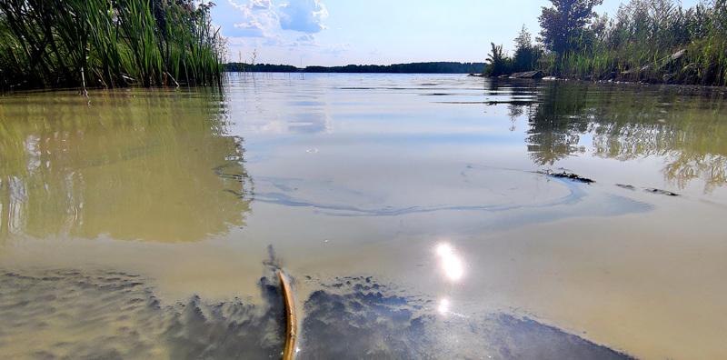 Sinilevää Räyringinjärvellä 26.7.2021.