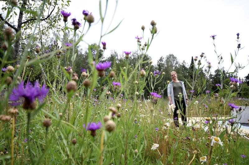 Brita Marian puistossa on myös kukkaniitty.