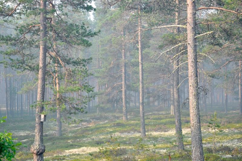 Maastopalon savu oli torstaiaamuna sankkaa Hiekkasärkkien Usvametsäntien alueella. Raution sijaan tuuli painoi  keskiviikkoiltana uudelleen syttyneen palon savut merelle päin. Torstaiaamun jälkeen savu haihtui myös HJekkasärklitä.