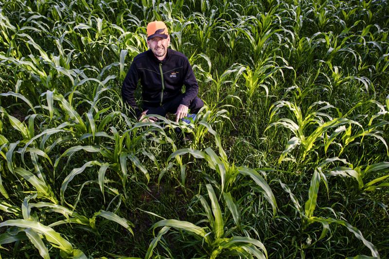 Peter Isakas viljelee maissia onnistuneesti Pietarsaaressa.