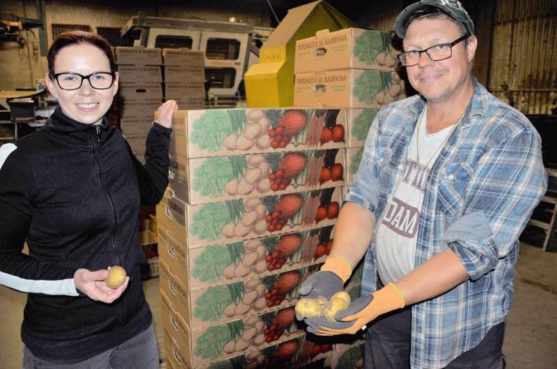 Maria ja Harri Muuraiskangas ja kuluttajalle sopivaan kokoon kasvanutta kesäperunaa.