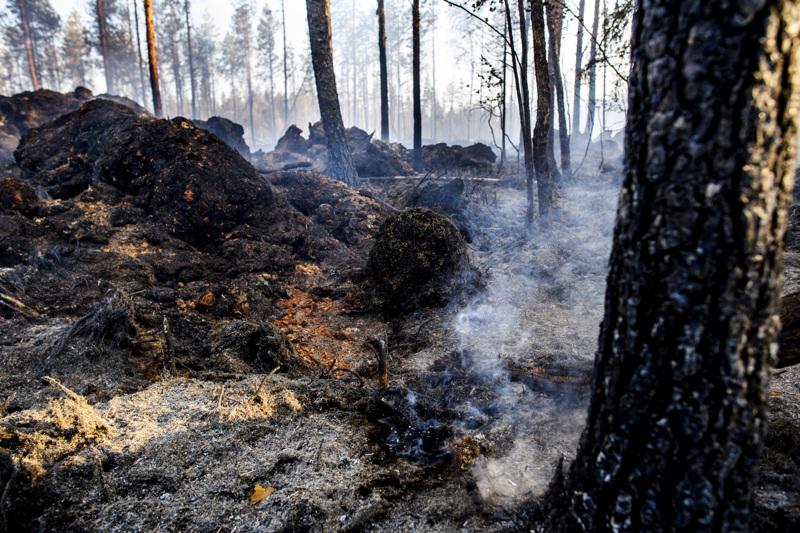 Palon taloudellisia vaikutuksia on vielä hankala arvioida, kun turmeltunut hehtaarimäärä ei ole tarkkaan tiedossa.