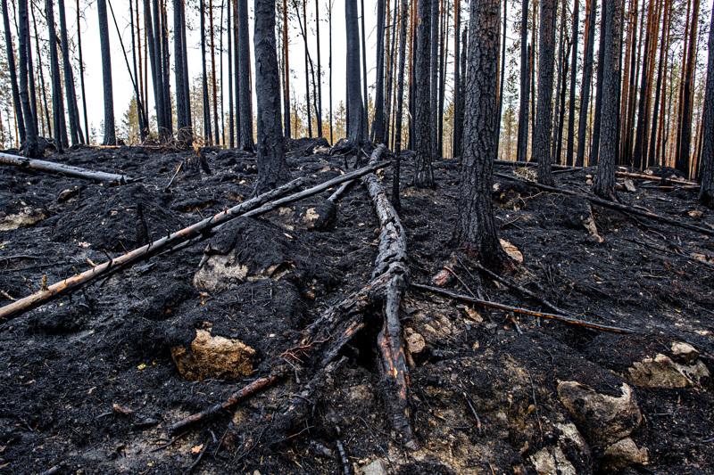 Kalajoen maastopalon tutkinta on erittäin hankalaa, koska maasto on palanut kauttaaltaan. Palon syttymisalue on pystytty kuitenkin rajaamaan kohtuullisen pienelle alueelle.