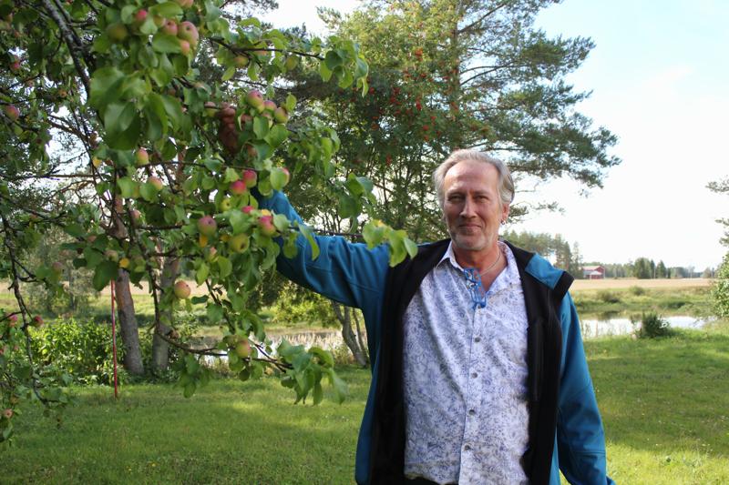 Marko Laitisen pihassa kasvavat kolme omenapuuta notkuvat omenoista. Pian ne ovat kypsiä.  - Käykää poimimassa omenoita, jos tarvitsette, sanoo Laitinen.