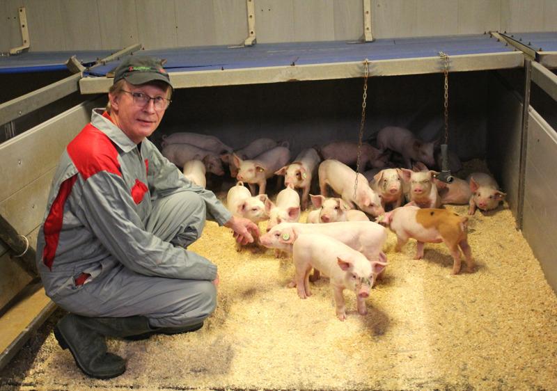 Eläinten hoitaminen on Hannu Kyllöselle yksi emakkosikalan pitämisen mieluisimmista töistä.
