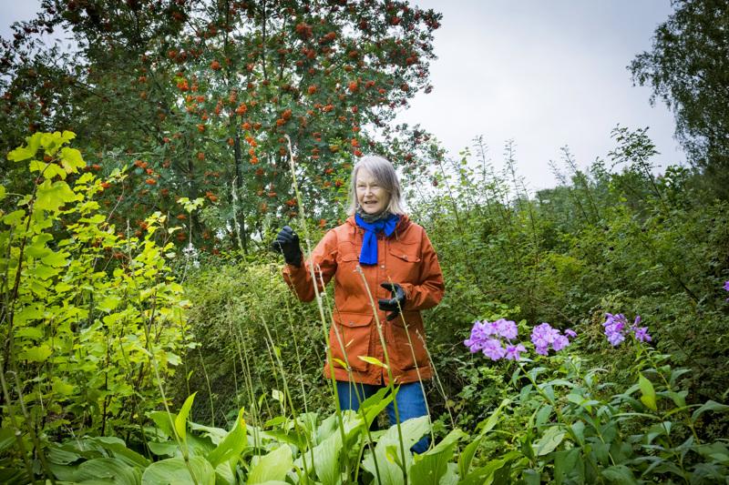 Hortonomi Armi Laukia vinkkaa keräämään kukkivista kasveista siemenet talteen syksyisin. Siemenet kannattaa laittaa talveksi paperipussiin ja kylvää keväällä maahan.