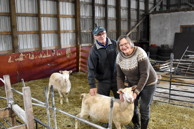Isossa lampolassa on jäljellä kaksi kerittyä lammasta. Ne odottavat lähtöä Lohtajalle minä päivänä tahansa. Jäähyväisiä eläimille on jätetty pikku hiljaa.