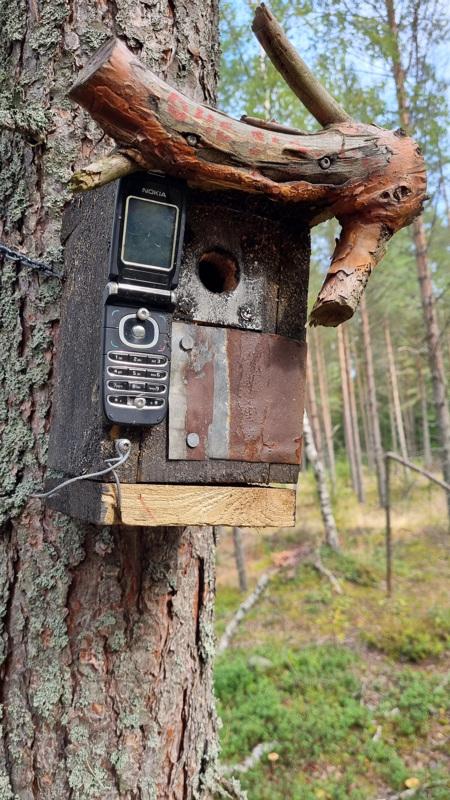 Lintujen puhelinkoppi.