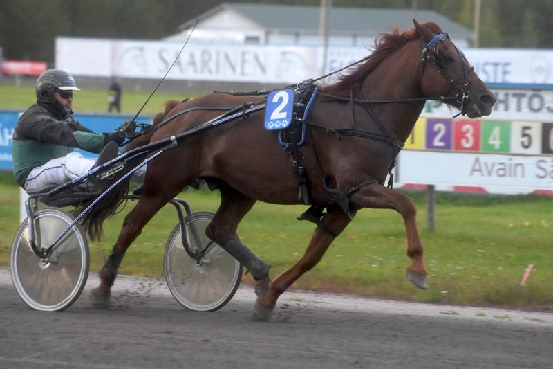 Juha-Matti Paavolan ohjastama ja valmentama Tarmo Ite oli Kaustisen perjantairavien ylivoimaisin voittaja.