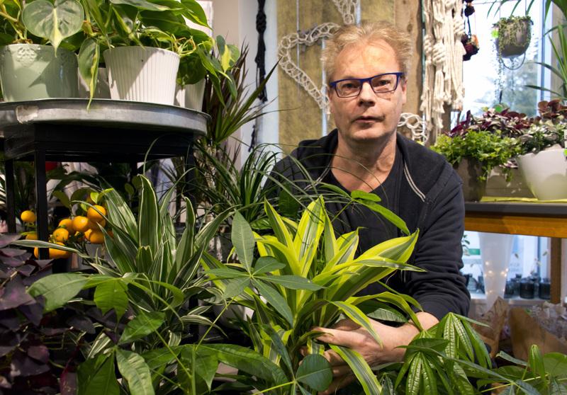 Limenvihreät huonekasvit ovat nyt erityisen trendikkäitä, kertoo floristi Teppo Lapinoja.