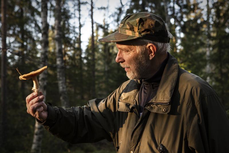 Kokkolanseudun sieniseuran puheenjohtaja Kenneth Bergroth auttaa sienten tunnistuksessa, moni sieni on syömäkelpoinen, osa ei.