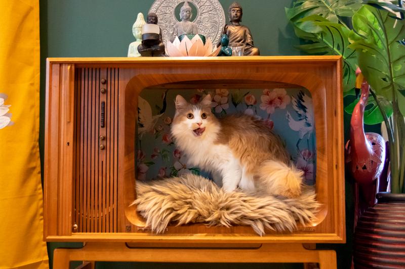 Surku viihtyy kissoille vanhaan telkkariin rakennetussa lepopaikassa.