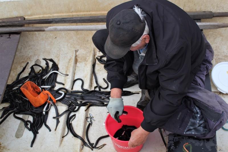 Ahti Penttilä palaamassa rysältä mukanaan useamman päivän saalis, 150 nahkiaista.
