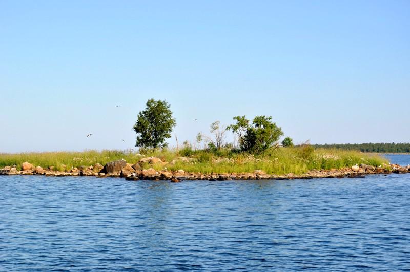 Rahjan saaristo on lintujen päämuuttoreitillä, joten sen luodoilla on runsaasti eri lintulajeja.