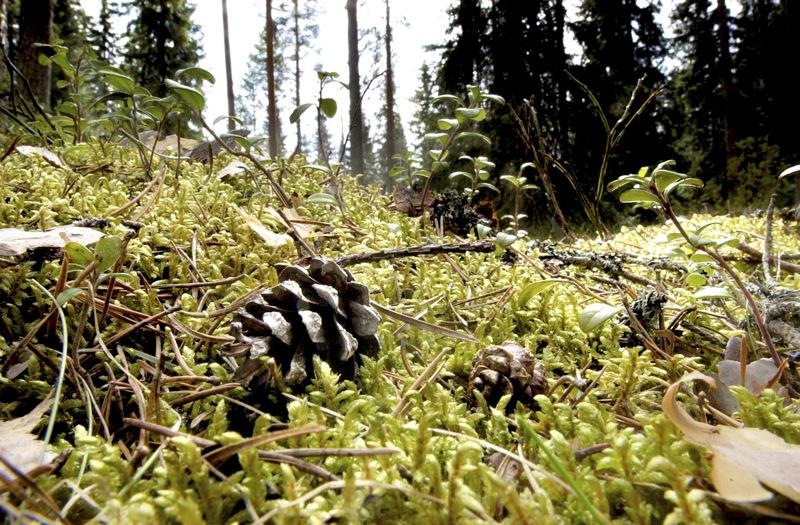 Metsitystuen hakeminen on ollut mahdollista reilun puolen vuoden ajan.