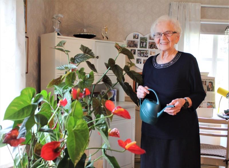 Viherkasvit viihtyvät vanhassa talossa.  –Kyllä ne ovat minulle kuin harrastus, toteaa kaustislainen Elsa Timonen.