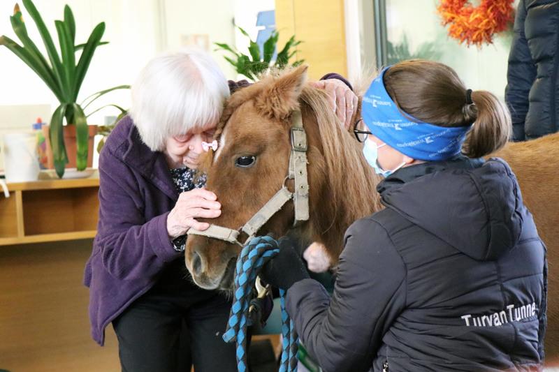 Mirjami Lokasaari kävi haalaamassa Solita-ponia, jonka Suvi Lempiälä oli tuonut vierailulle Harjukodille.