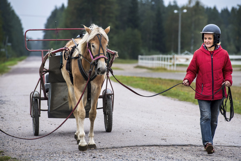 Ylivieskalainen eläinlääkäri Katri Helminen on touhunnut hevosten kanssa neljän vuosikymmenen ajan. Hänen mukaansa toimintakulttuuri on muuttunut parempaan suuntaan.