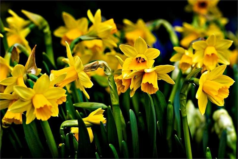 pääsiäisen tapahtumat Ikaalinen