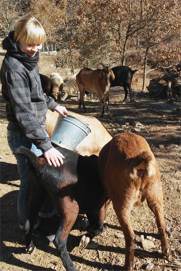 Muun muassa vuohien ruokkiminen kuului Mirellan ja Johanneksen päivittäisiin rutiineihin. Vuohet oli pelastettu konkurssiin menneeltä maatilalta.