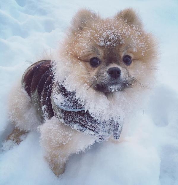 Börje ei tykkää uimisesta, mutta lunta se rakastaa.