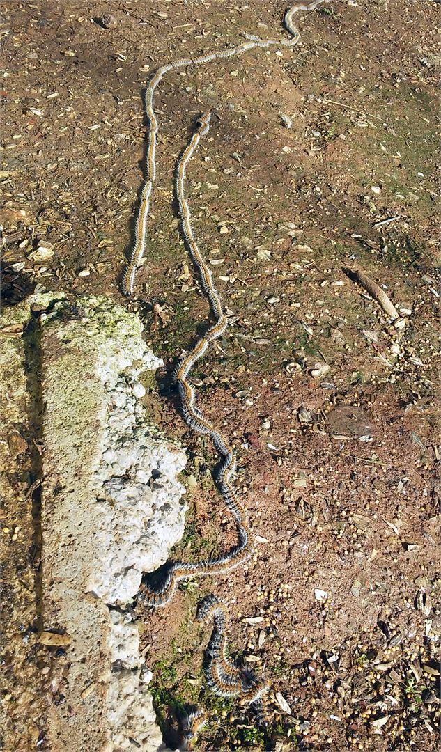 Isokulkukehrääjäntoukot kulkevat letkassa, joten ne on helppo tunnistaa.