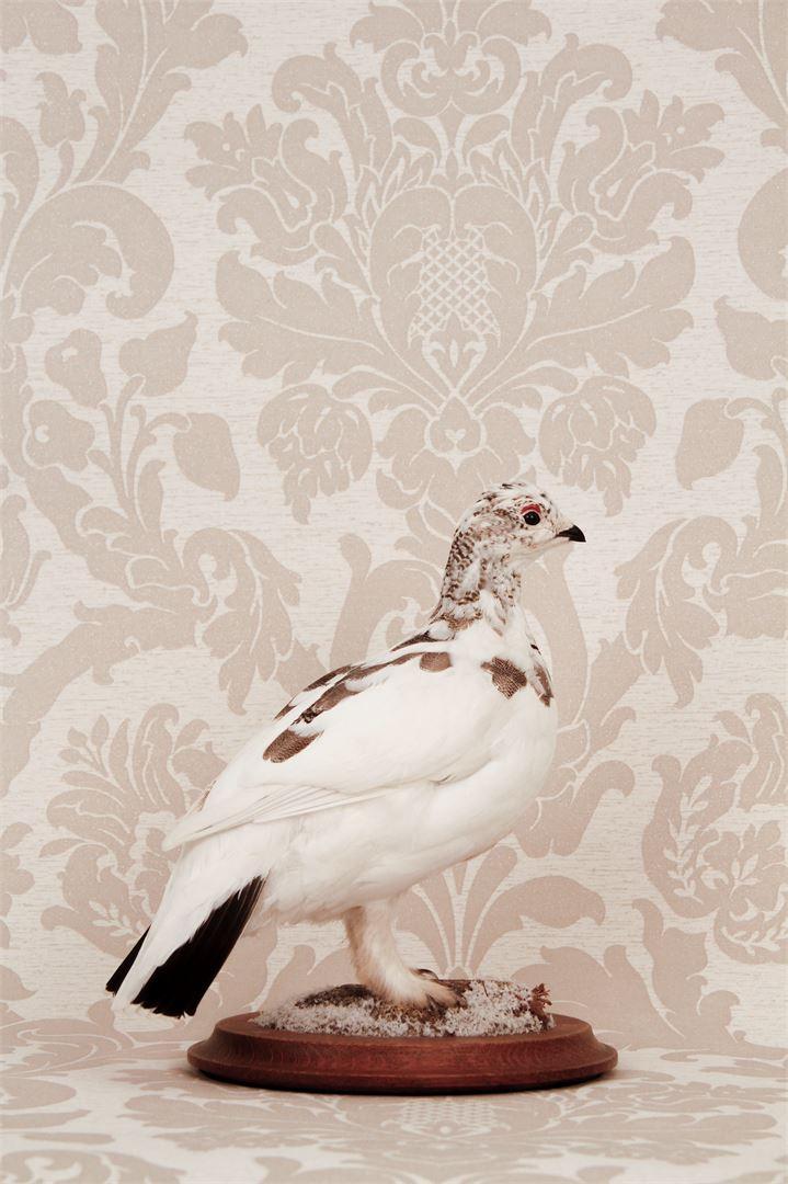 Lempiäinen täyttää mielellään lintuja, sillä lopputuloksesta tulee yleensä kaunis.