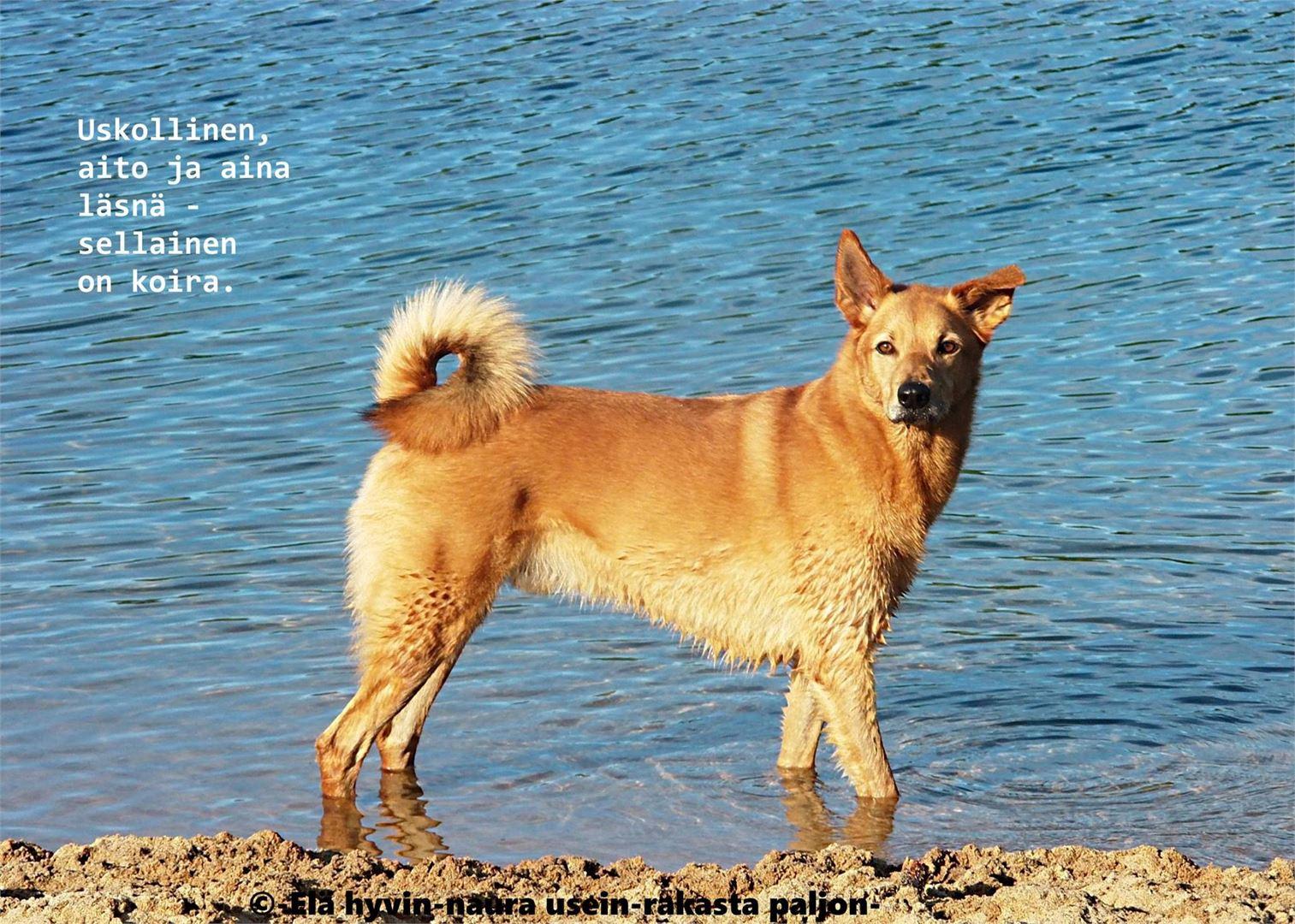 Useimmissa sivuston päivityksissä seikkailevat Helinän koirat. - Koirat ovat olleet ja tulevat aina olemaan parhaita terapeutteja, joskaan eivät aina halvimpia, Helinä naurahtaa.