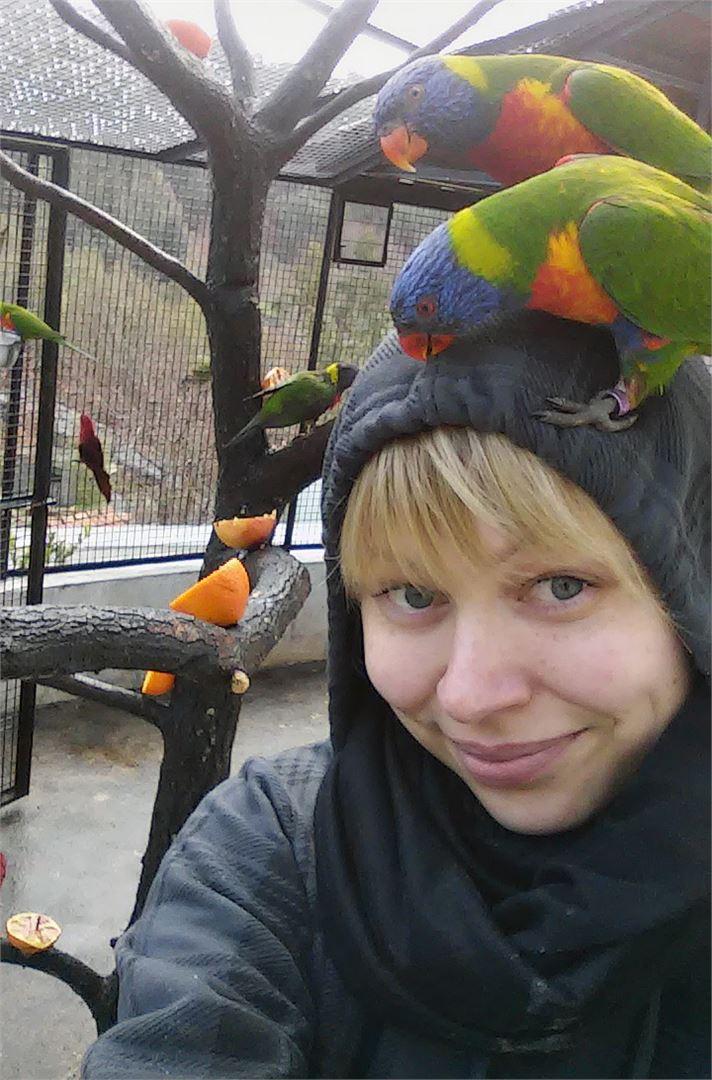 Eläinfarmilla oli kymmeniä Luri-lintuja. Kaikki niistä olivat äänekkäitä ja uteliaita.