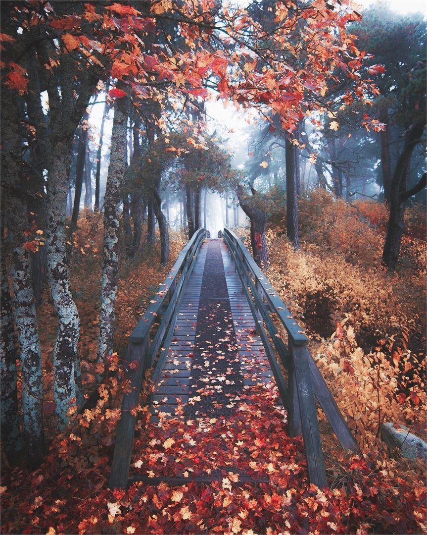 Leading Line on tehokas keino saada kuvaan syvyyttä ja houkuttelevuutta. Tässä kuvassa katsetta johdattaa silta.